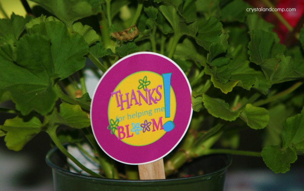 photo regarding Thanks for Helping Me Bloom Printable called Trainer Appreciation: Owing for Assisting me Bloom Flower Pot