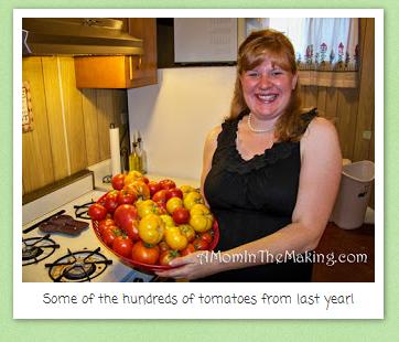 grow the perfect tomato